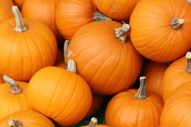 Bake_these_(pumpkins_in_Toronto)